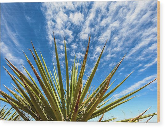 Cactus And Blue Sky Wood Print