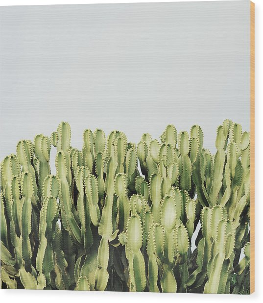 Cactus And Sky Vintage IIi Wood Print