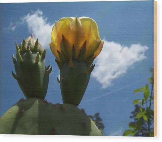 Cactus Beginning To Bloom Wood Print