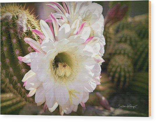 Cactus Bloom 2 Wood Print