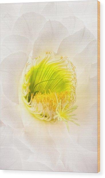 Cactus Bloom Number Five Wood Print