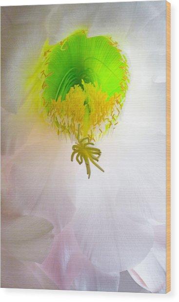 Cactus Bloom Number Six Wood Print
