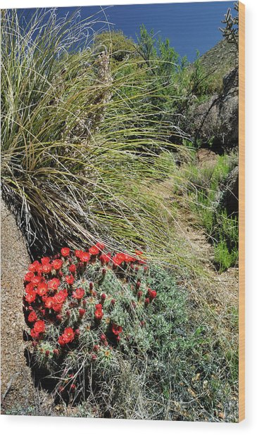Crimson Barrel Cactus Wood Print