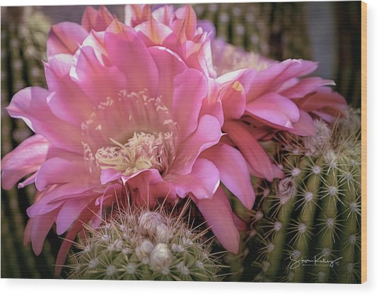 Cactus Bloom Wood Print
