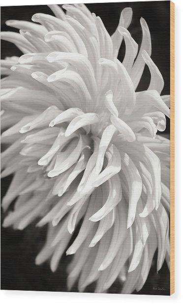 Cactus Dahlia Wood Print