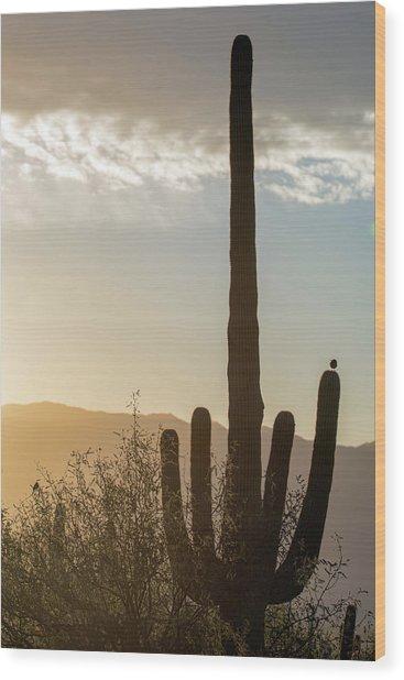 Wood Print featuring the photograph Cactus Dancing by Dan McManus