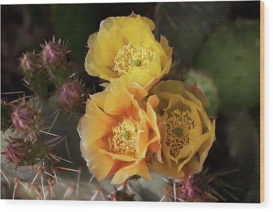 Yellow Cactus Flowers Wood Print