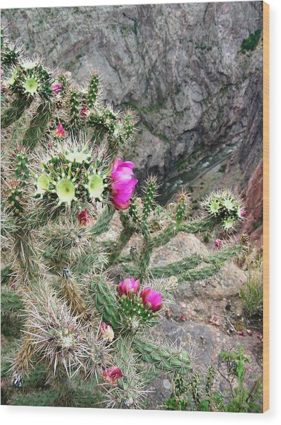 Cactus Gorge Wood Print by Peter  McIntosh