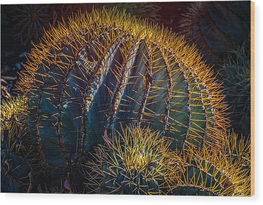 Wood Print featuring the photograph Cactus by Harry Spitz