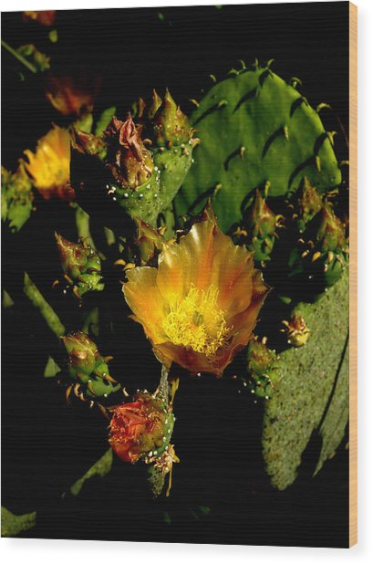 Cactus In Sunset Light Wood Print by James Granberry