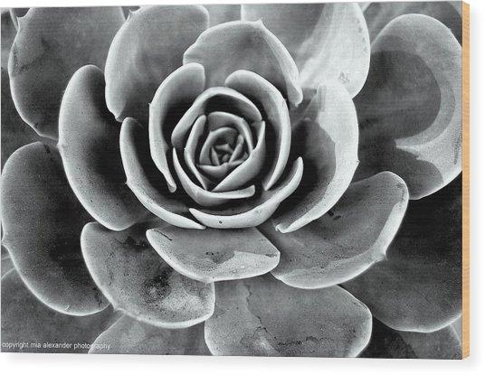 Cactus Ll Wood Print