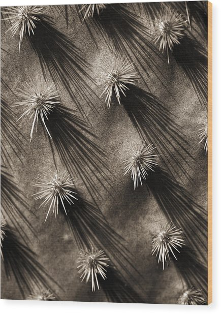 Cactus Shadows Wood Print by Bob Coates