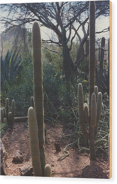 Cactus With Mountain Wood Print by Eliot LeBow