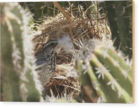Cactus Wren Feather Wood Print