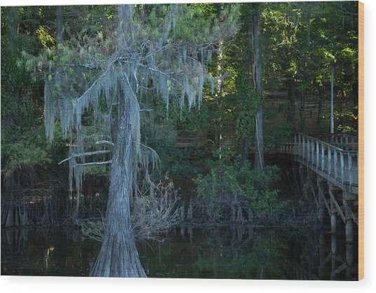 Caddo Lake #1 Wood Print