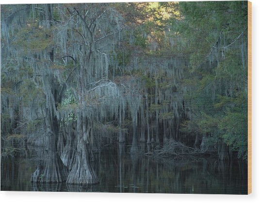 Caddo Lake #2 Wood Print