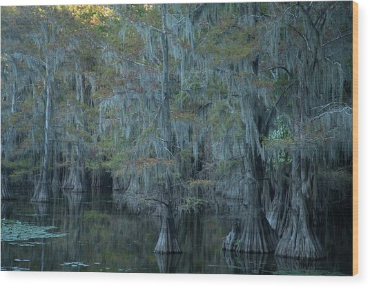 Caddo Lake #3 Wood Print