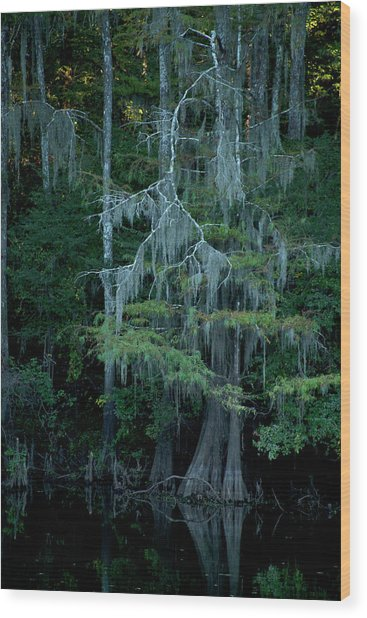 Caddo Lake #4 Wood Print