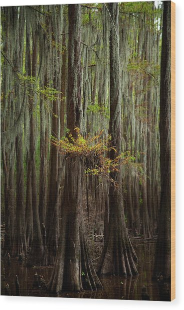 Caddo Lake #5 Wood Print