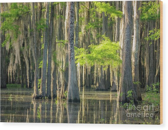 Caddo Swamp 1 Wood Print