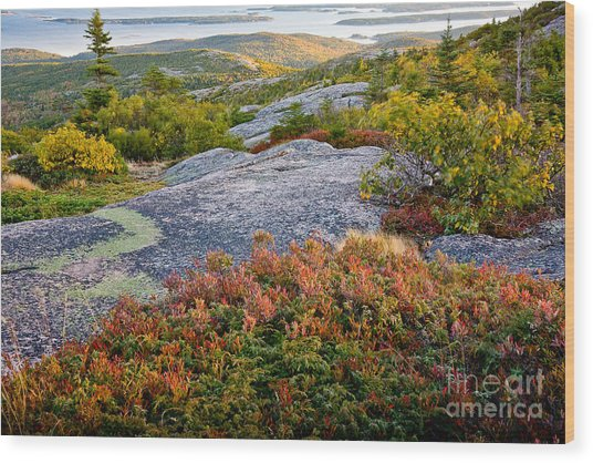 Cadillac Rock Garden Wood Print