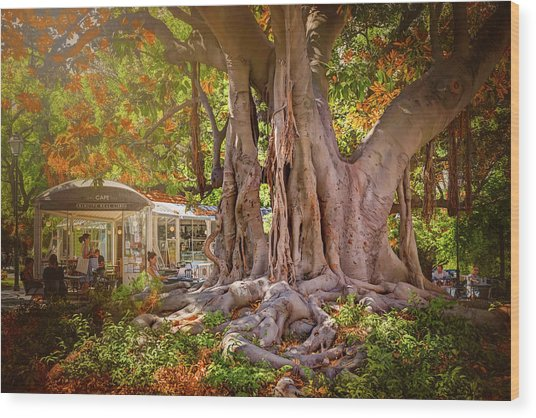 Cafe By The Grand Old Tree Lisbon Portugal Wood Print