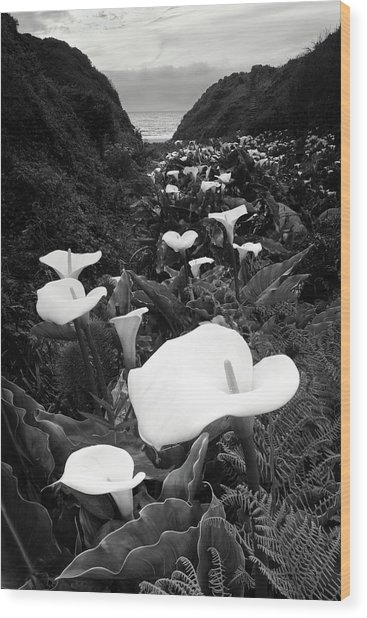 Big Sur - Calla Lily Wood Print
