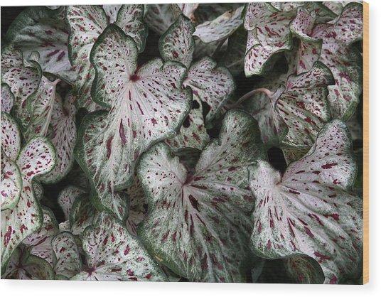 Caladium Leaves Wood Print