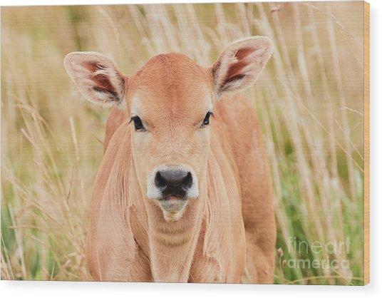 Calf In The High Grass Wood Print
