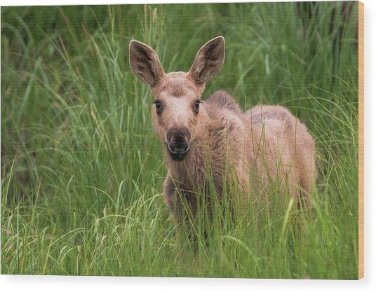 Calf Moose In The Grass Wood Print