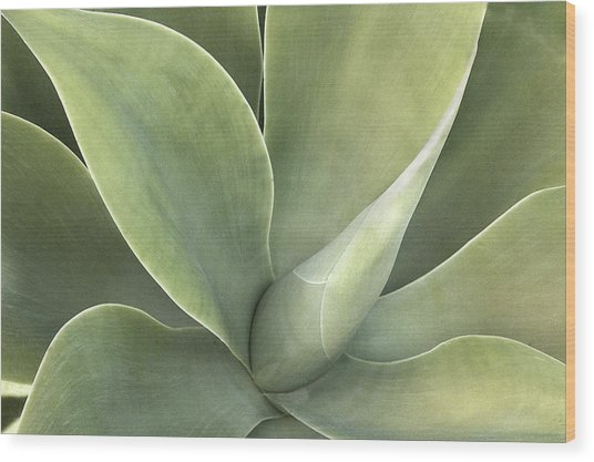 Cali Agave Wood Print