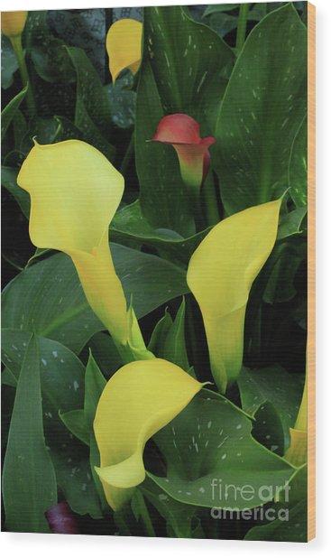 Cali Lilies Wood Print by David Shaffer