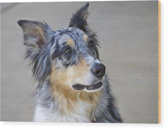 Calico Dog Wood Print by Robert Joseph
