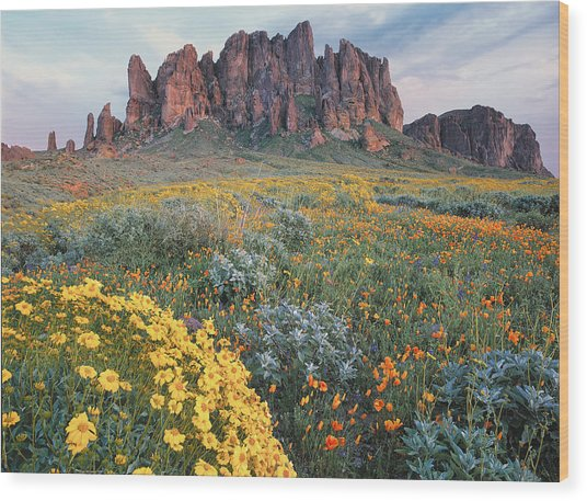 California Brittlebush Lost Dutchman Wood Print