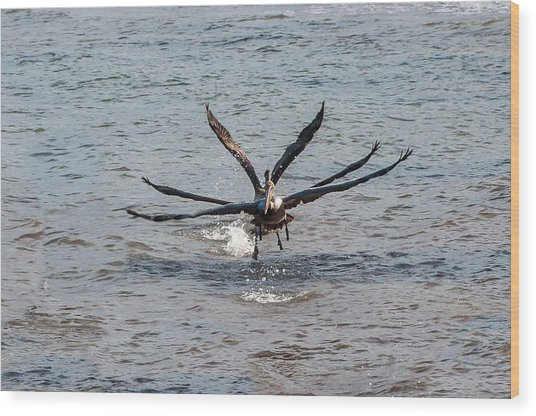 California Brown Pelicans Flying In Tandem Wood Print