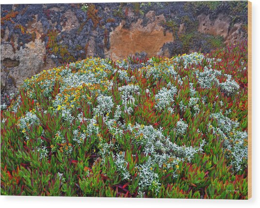 California Coast Wildflowers Wood Print