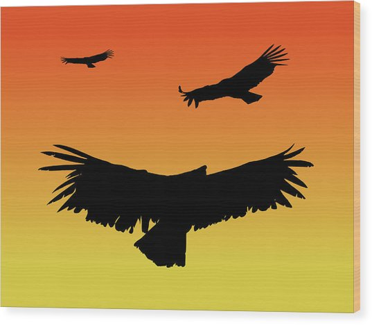 California Condors In Flight Silhouette At Sunset Wood Print