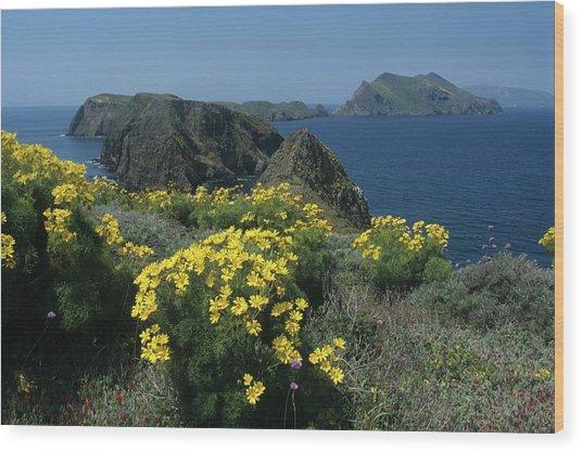 California Island Sunshine Wood Print