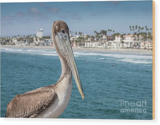 California Pelican Wood Print