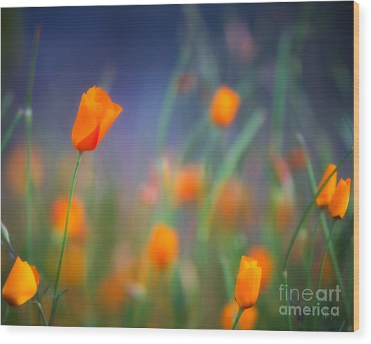 California Poppies 2 Wood Print