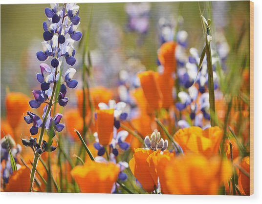 California Poppies And Lupine Wood Print
