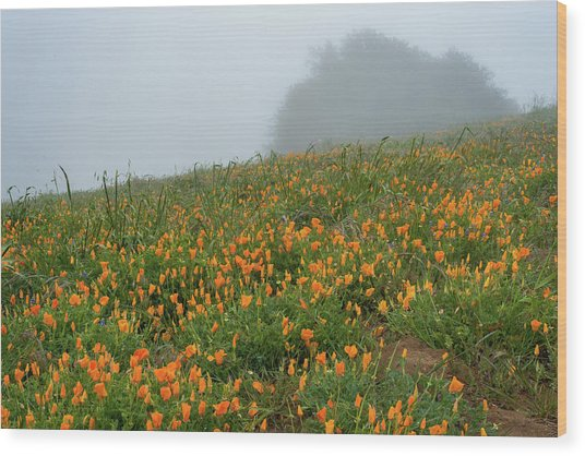 California Poppies On Volcan Mountain Wood Print