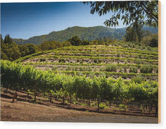 California Vineyard Wood Print by Robert Davis