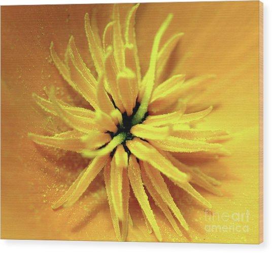 Californian Poppy Macro Wood Print