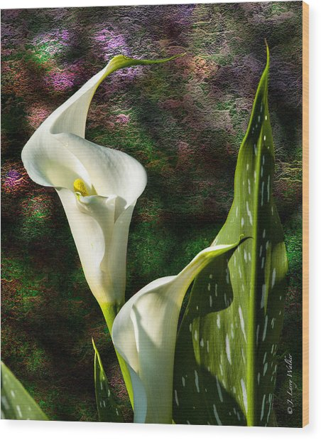 Calla Lily - P. Bright Wood Print