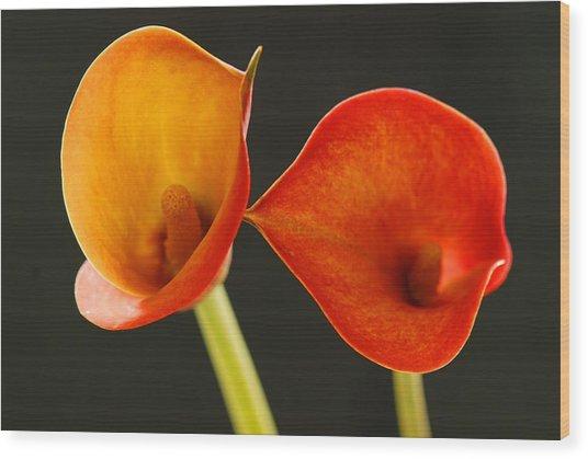 Calla Lily Wood Print by Dennis Hammer