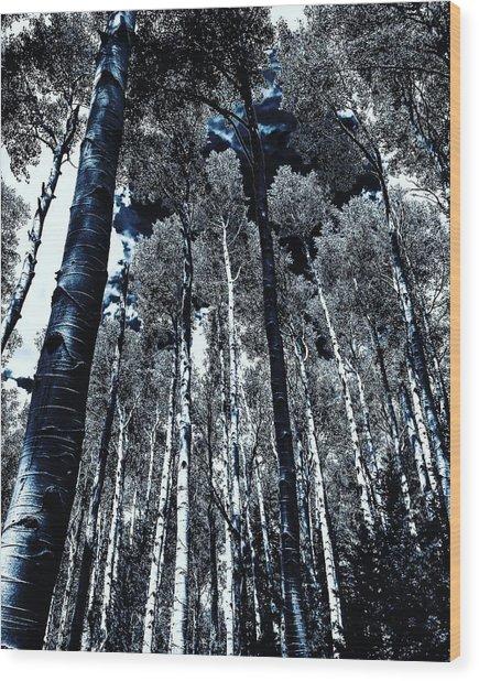 Calm Amongst The Aspens Wood Print