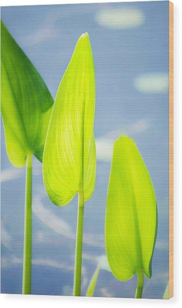 Calm Greens Wood Print