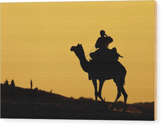 Camel At Jaisalmer, India Wood Print