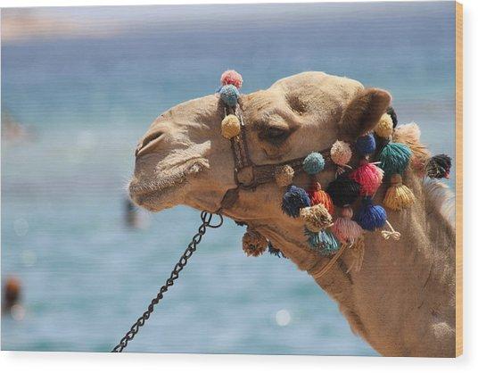 Camel By The Sea Wood Print by Tawfik W Dajani